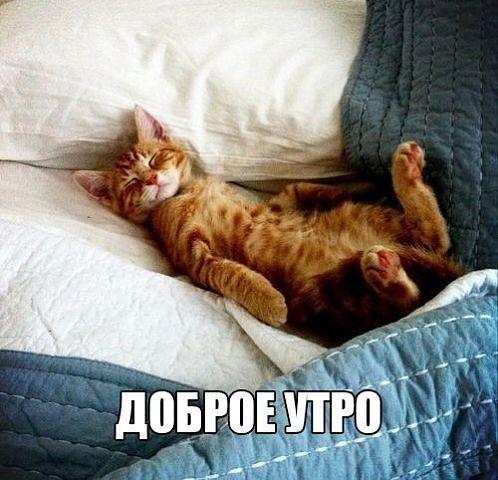 котик добрым картинка с утром