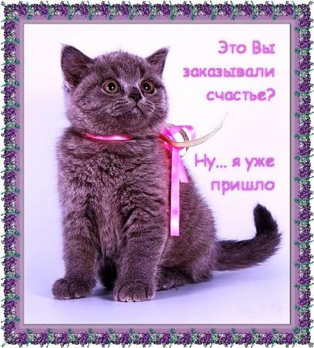 Поздравление с покупкой котенка 27