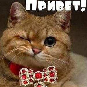 Дронт Николай В ту же реку  samlibru