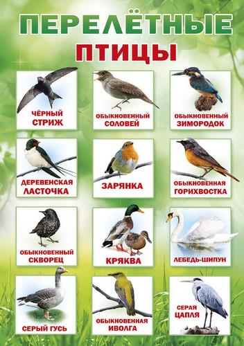 Картинки перелетные птицы для детского сада с названиями