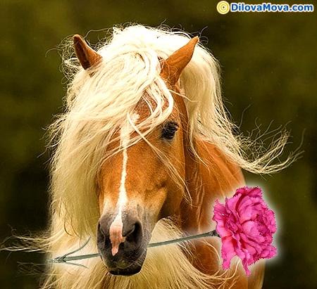 Красивые открытки с лошадьми 80